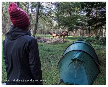 Wir zelten wild und bekommen Besuch. Etwa eine Stunde bleiben wir in netter Gesellschaft, dann wird es den südamerikanischen Lieblingstieren mit uns zu langweilig und sie ziehen in den Wald.