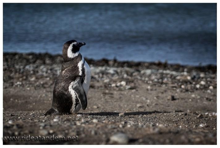 Meerblick, auch bei Pinguinen beliebt. Für uns Ruhe und Entspannung für Pinguine eher der Blick auf die Speisekarte.