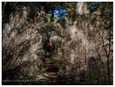 Der Bambus steht bis dicht an den Weg und teilweise sogar darauf. Später geht es in einen Laubwald über. Davon haben wir nur kein Bild ;-)