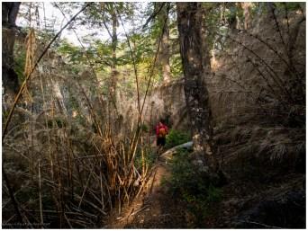 Es geht wieder durch vertrocknete Bambuswälder. Schnell ist klar, die würden verdammt gut brennen. Wir sollten nicht trödeln.
