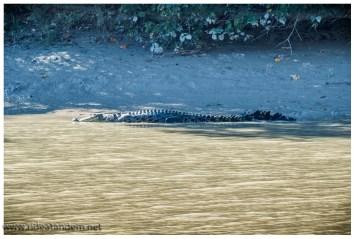 Aber Cahill Crossing ist für jeden Krokodilbegeisterten (das sind wir definitiv) ein Muss. Hier kann man sicher und ohne Tourguide Krokodile bewundern.