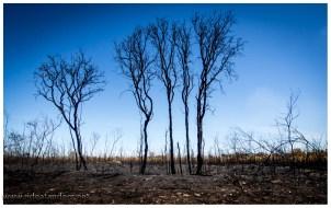 Buschfeuer, wenn es vorbei ist. Die Natur soll das brauchen, ich bin da nicht immer sicher. Manchmal sieht es nach mehr Zerstörung aus als notwendig, aber gut.