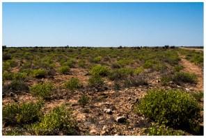 Wir haben Glück und dürfen uns an der grünen Wüste erfreuen. Auch 'viele' Bewohner des Tracks sind überrascht wie grün die Wüste ist.