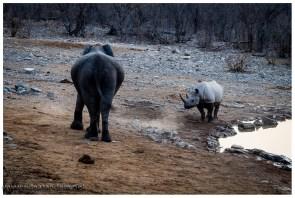 Elefanten und Nashörner sind nicht die besten Freunde