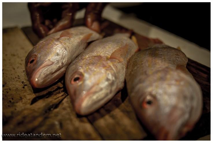 3 frische Fische für ein Gericht, mehr geht nicht.