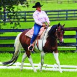 Western Dressage Finding A Suitable Horse Ride Magazine