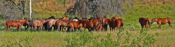 horse-meeting-bc