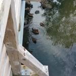 Ducks at Parc Richelieu surrounding Lac Goudreault
