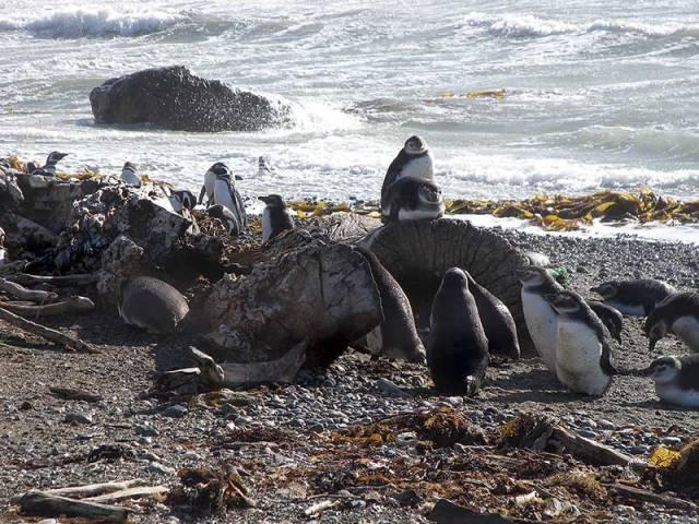 Tierra del Fuego, Punta Arenas, Patagonia, Chile
