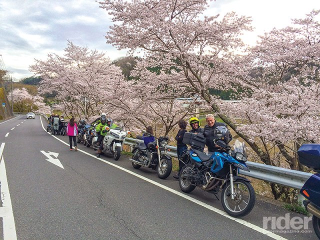 A pause to admire the cherry blossoms on the last riding day.
