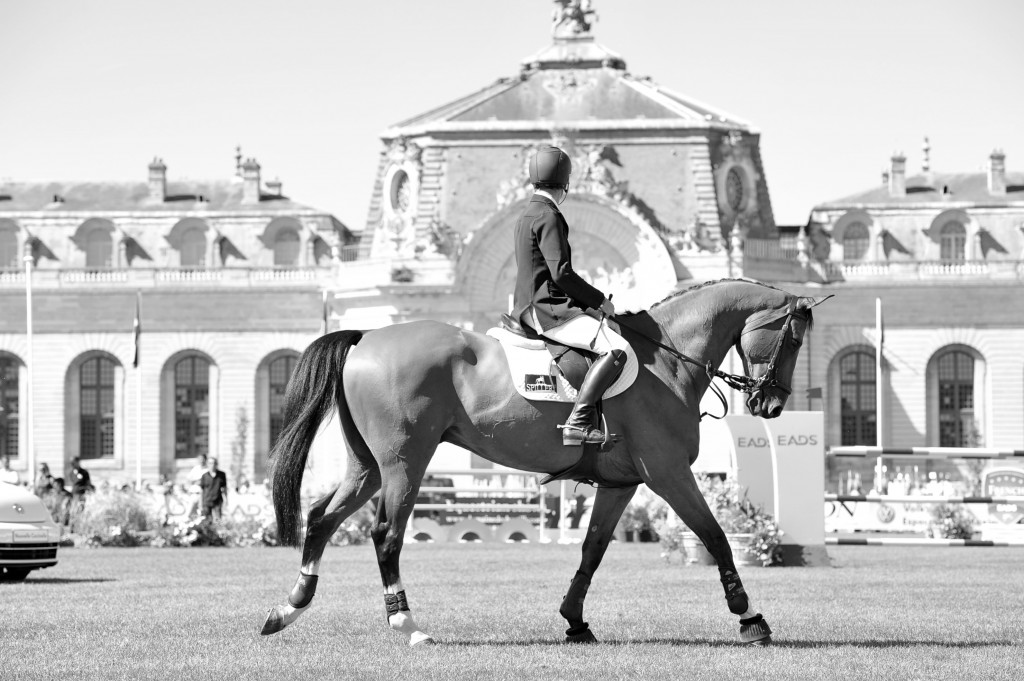 Equitazione LIVE