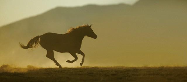 cavallo che galoppa impulso