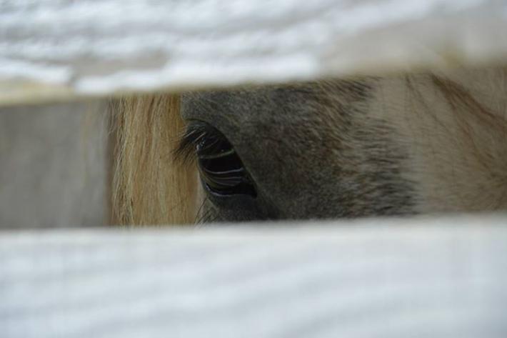 la vista dei cavalli