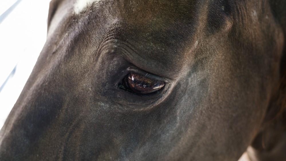 disagio del cavallo day pass