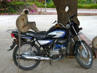 Motorcycle-Monkey