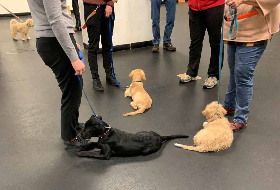 puppies learn to socialize with each other