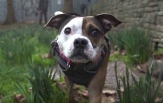 Short-Travel Enduro Hound Poppy Trail Dog