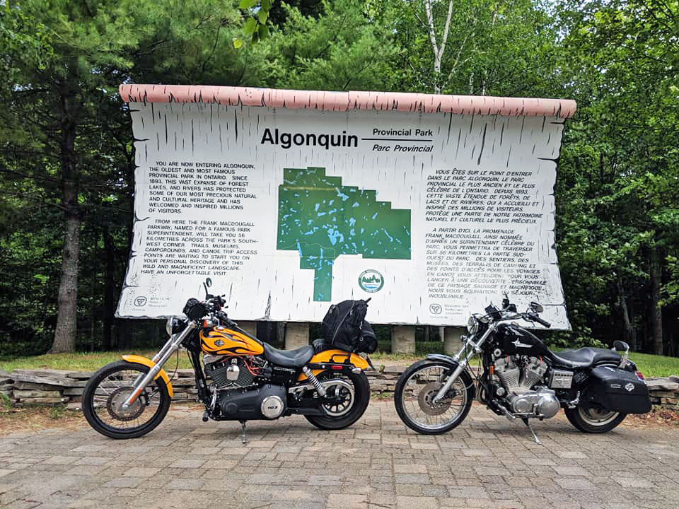 Large birch scroll with motorcycles