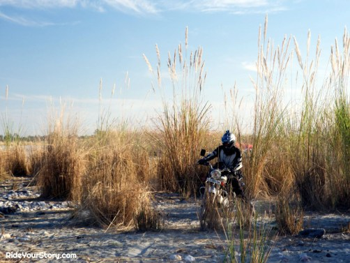 Riding through the overgrowth. check the height of the ... I'm the small one to call that plant a 'weed'