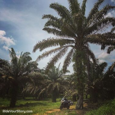 surround by nature (ok it's artificial plantation)