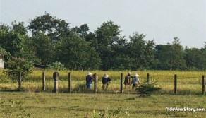Farmers tending to their field surrounding the complex, or possible even atop the uncovered part.