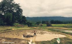 Farmer working on their field