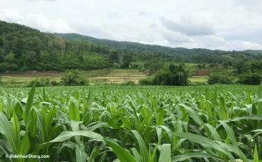 a farm in Uttaradit