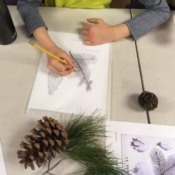 Boy drawing Pinecone