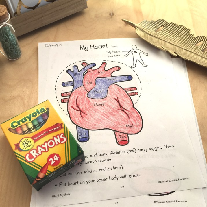 My Body book by Teacher Created Resources