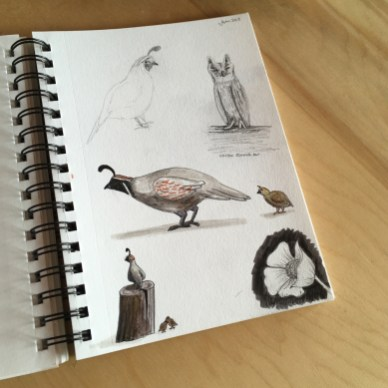 Quail Sketch book 1- web