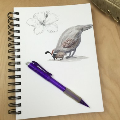 Quail Sketch book 2- web