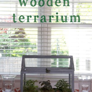 DIY Mini Wooden Terrarium