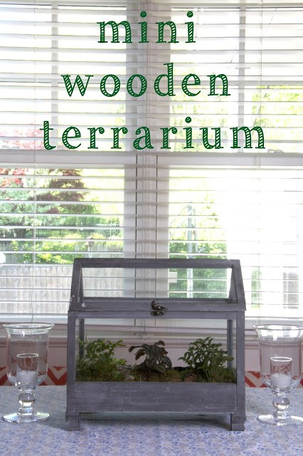 mini wooden terrarium (1) | Ridgely's Radar