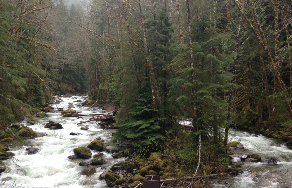 Skykomish River Fishing - Ridge to River Outdoors