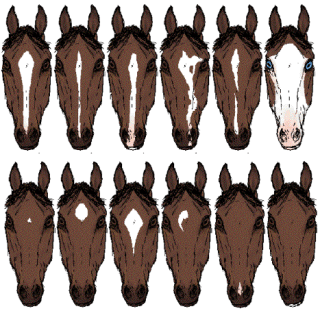 Markings and Colours - Horses