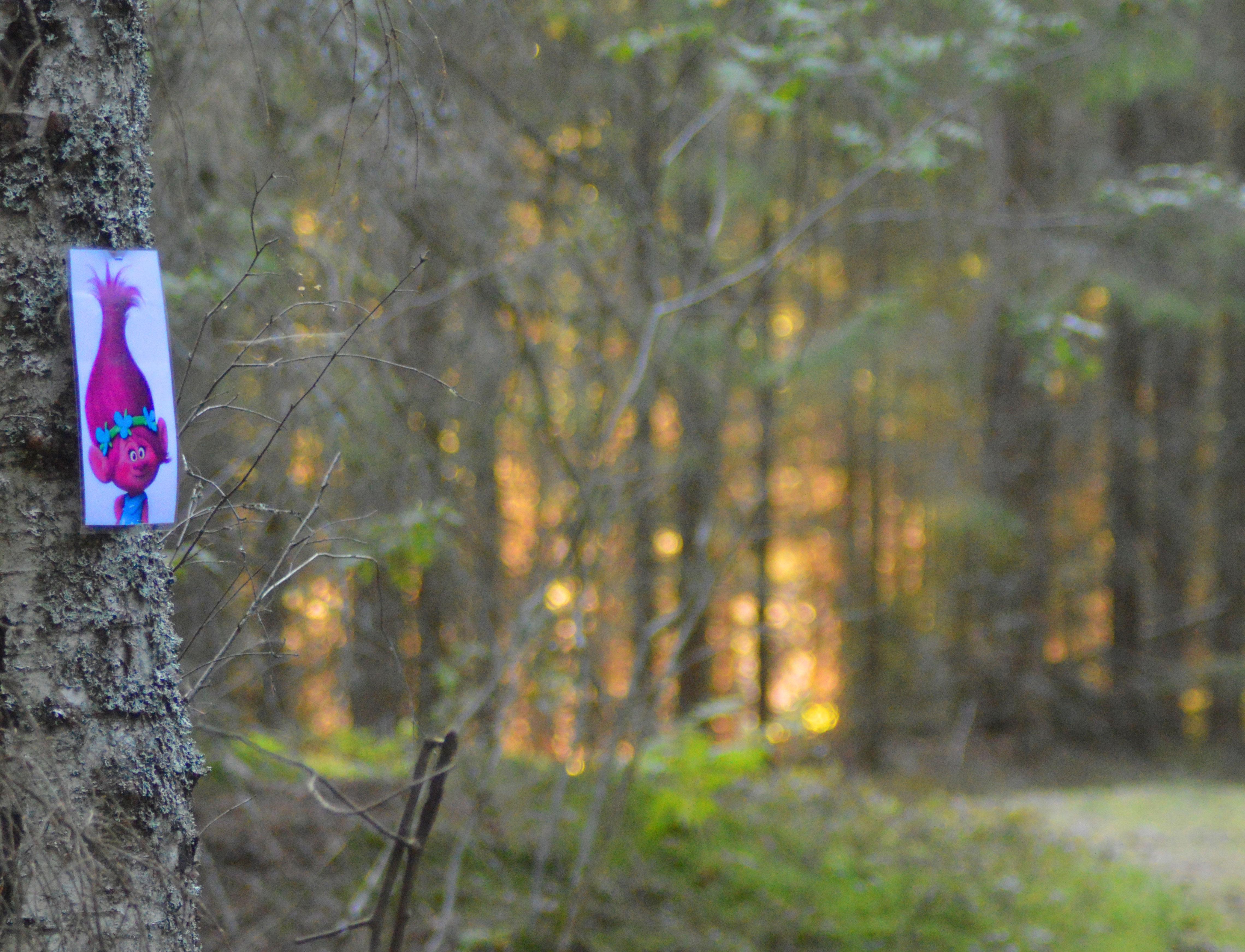 skogen3.jpg
