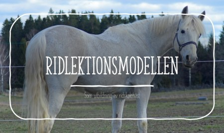 Hur man kan använda ridlektionsmodellen till utbildning av ridskolehästar