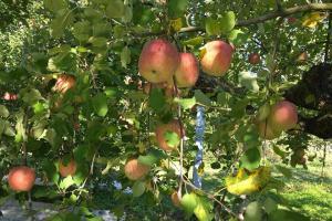 10/28&10/29    まるごと1日コーチングセミナー&癒しのりんご園ツアー