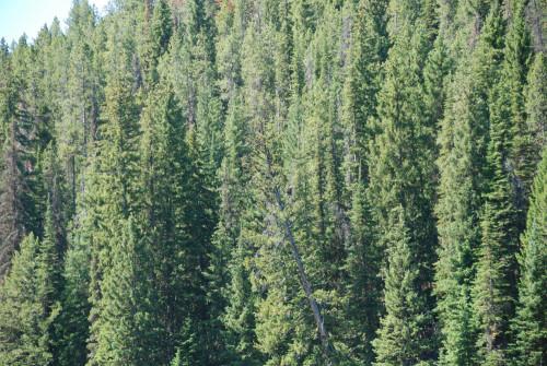 De weg vinden in het oerwoud van leidinggeven
