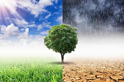 De veerkracht van een boom in vier seizoenen