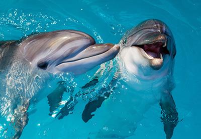 dolfins nudge