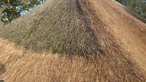 rieten dak reinigen-reiniging