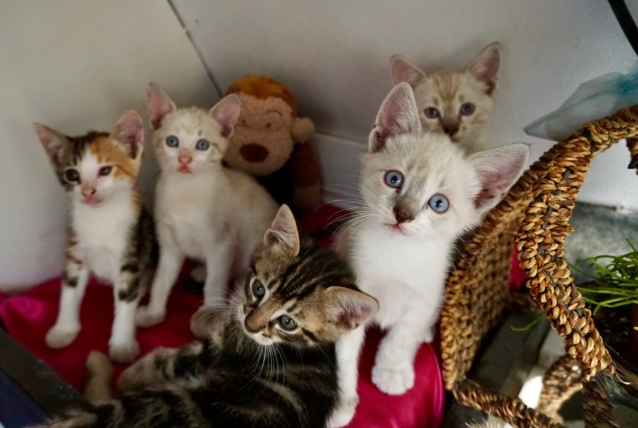 five cats living in self converted rv