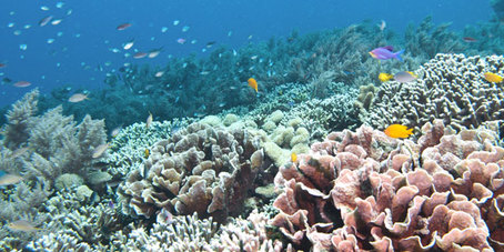 Afbeeldingsresultaat voor koraalriffen - rif-in-gevaar