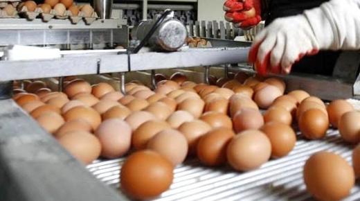 القضاء يصدر حكمه في حق المتهمة بسرقة 16 بيضة من معمل برلماني