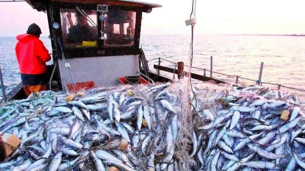 ارتفاع قيمة منتجات الصيد البحري المسوقة بموانئ الشمال