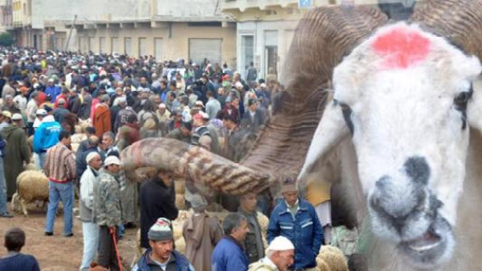الداخلية تضع إجراءات صارمة وشروط لذبح أضاحي العيد