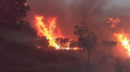 الآن: اندلاع النيران بعدة ولايات جزائرية ليلة الجمعة-السبت(+ صور وفيديو)
