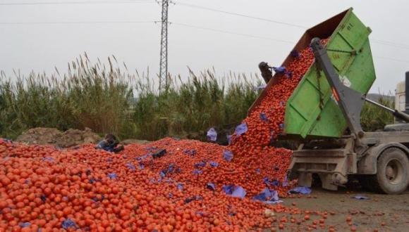 روسيا تفرض عقوبات على صادرات المغرب من الطماطم لهذه الأسباب