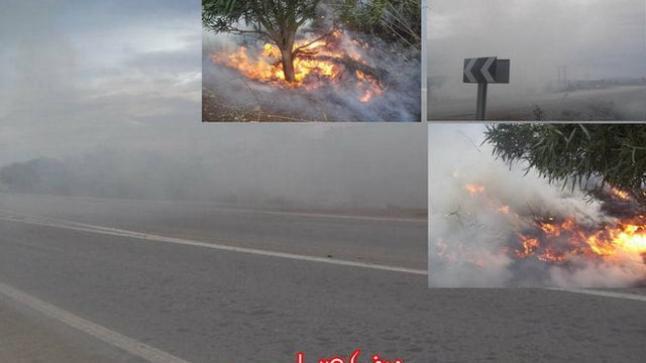 تصاعد سحب كثيفة من الدخان بأركمان بعد إندلاع حريق في مساحة شاسعة من القصب